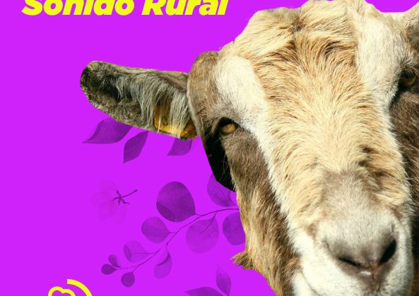 Sonido Rural Vol. 2